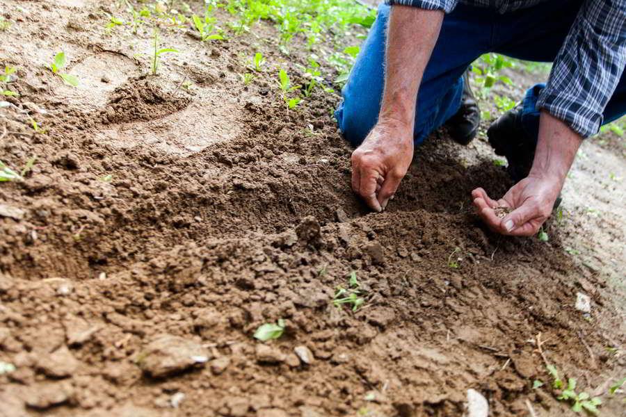 Como plantar uma planta: Guia de aspetos chave
