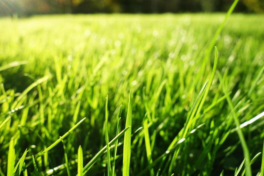 Tratamento do jardim: Como cortar o relvado?