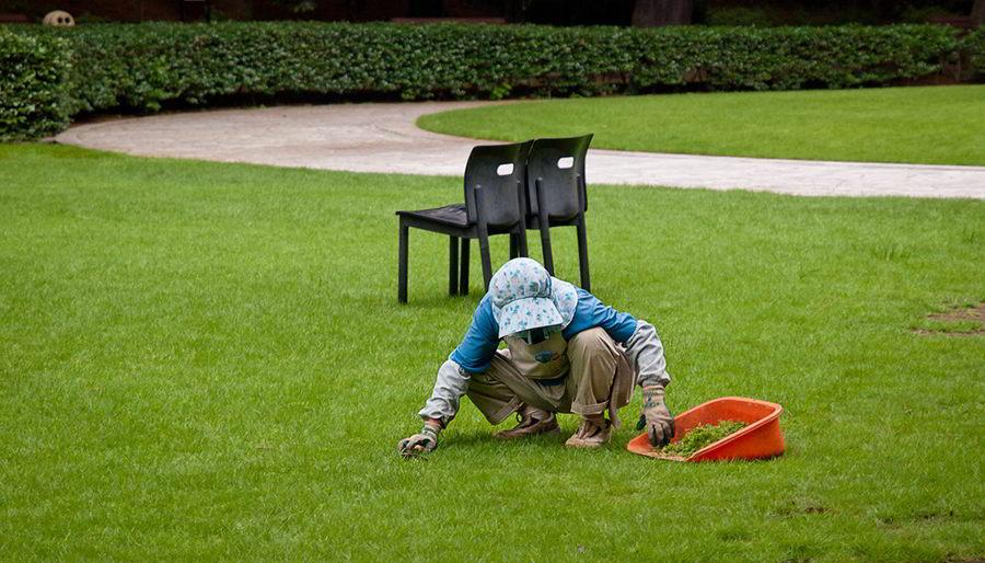 arranque manual de ervas daninhas