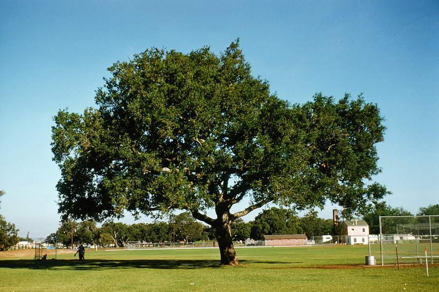 Árvore Europeia do Ano