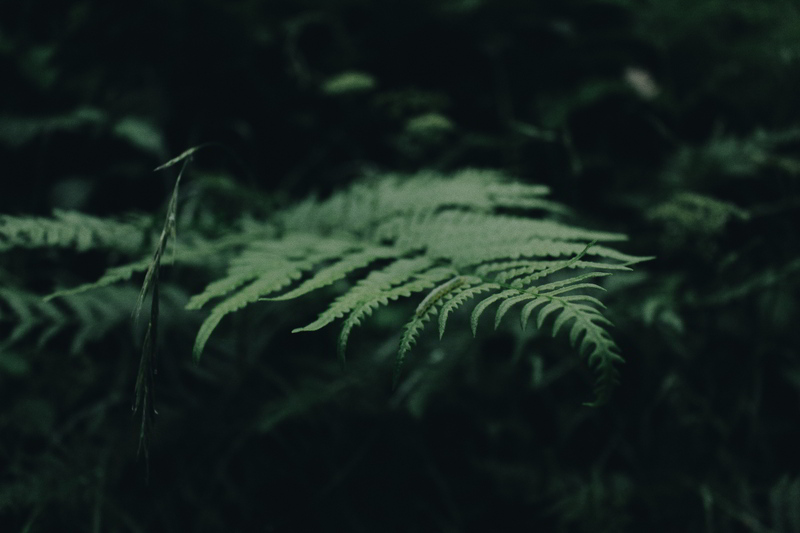 Plantas de sombra, as espécies perfeitas para jardins com pouca luz