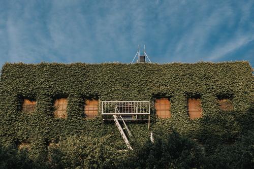 Jardim vertical em edifício