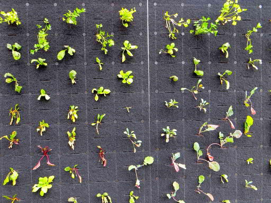legumes em jardim vertical
