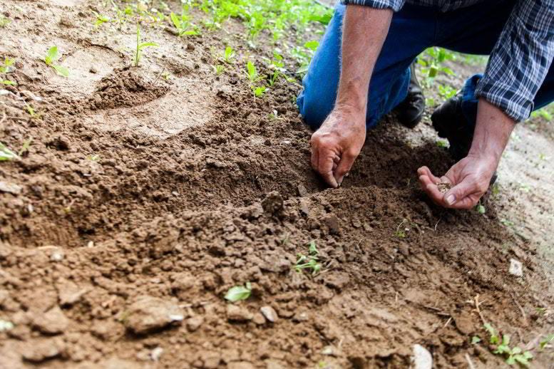 O que torna um solo bom?
