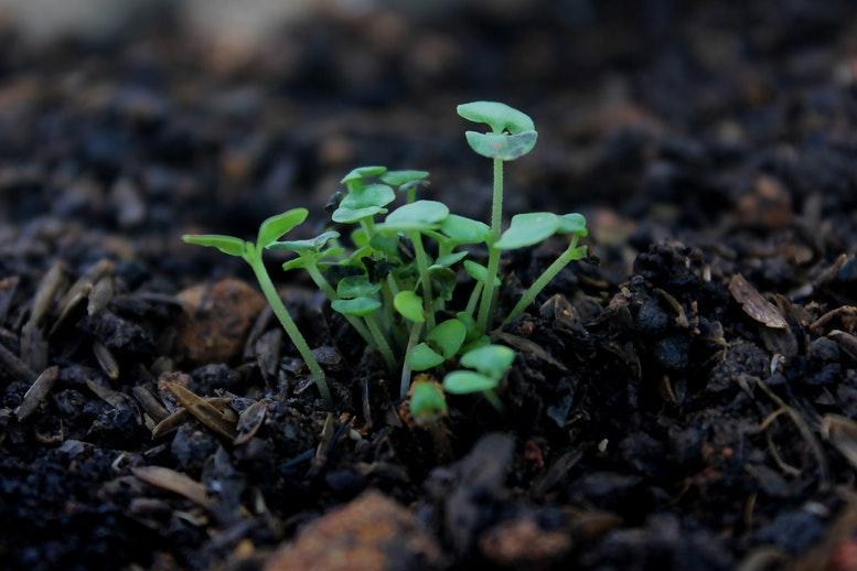 solo arável