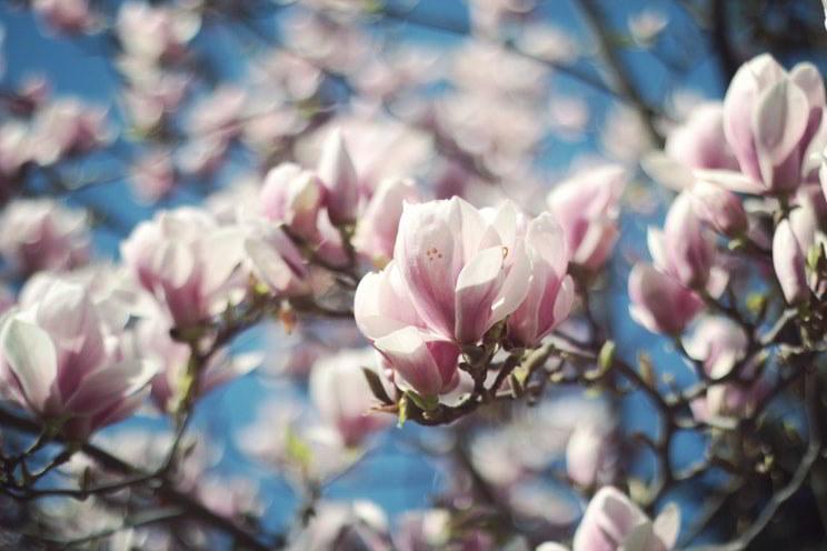 Procura um jardim sempre verde? Plante árvores de folha perene