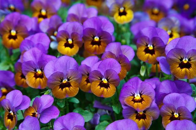 Descubra cinco plantas de inverno ideais para o jardim